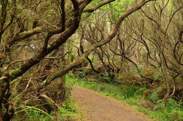 Trilha para o Cape Otway Ligthstation